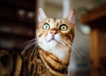 Domestic terrorism law talks alarms kitty